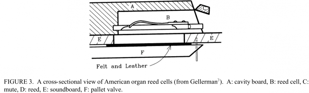 Free reed from harmonium.png